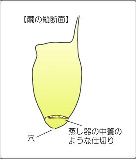ウスタビガ繭.png