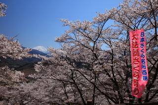 大法師公園の桜.JPG